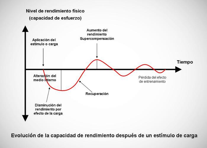 Esquema de la evolución de la capacidad de respuesta del organismo ante la aplicación de un estimulo.
